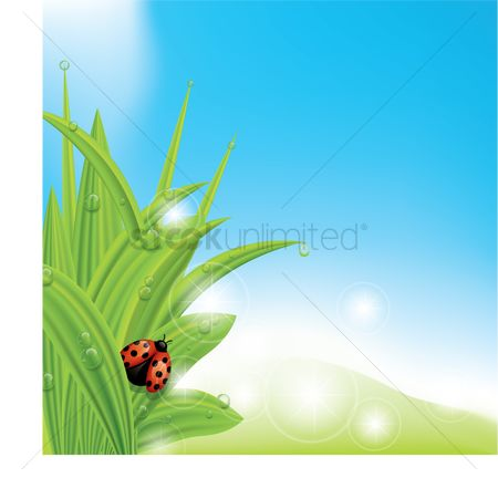 Grass background : Ladybug on fresh grass