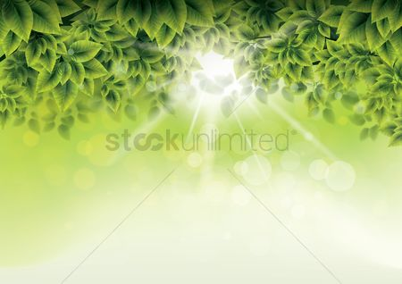 Spring : Leaves background