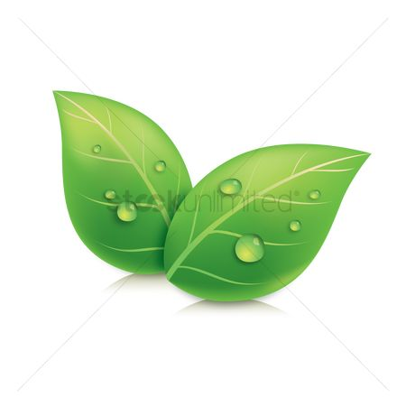 Clean : Leaves with water droplets