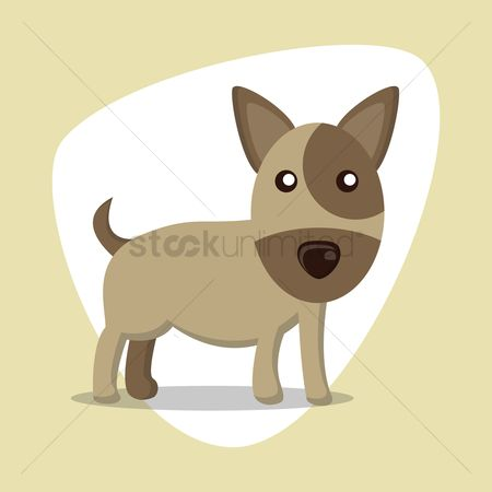 Bull : Miniature bull terrier dog
