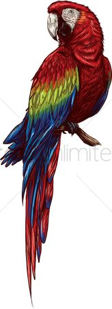 Feather : Parrot
