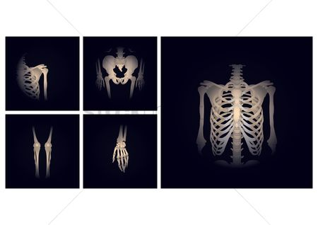 Medical : Parts of skeleton