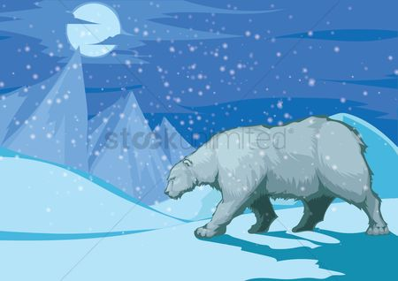 Mountains : Polar bear in winter