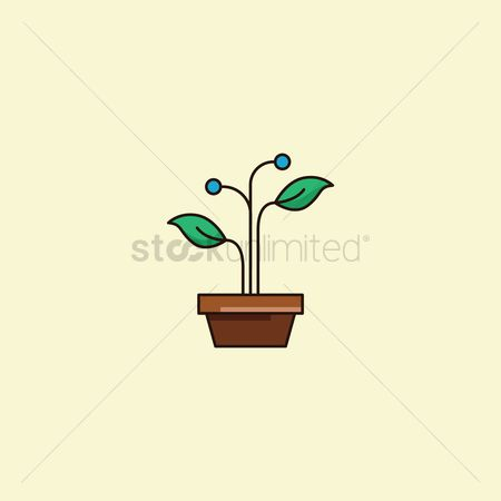 Indoor : Potted plant