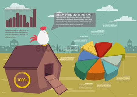 Roosters : Poultry infographic