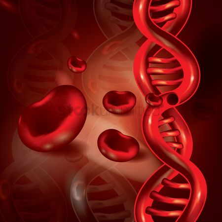Dna : Red blood cells and dna