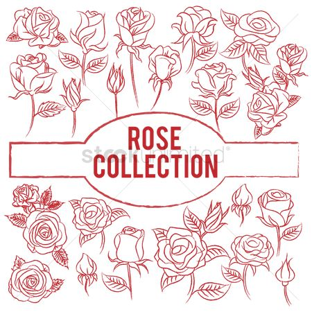 Rose : Rose collection
