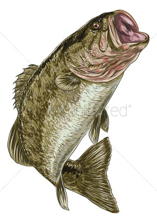 Marine life : Sea bass