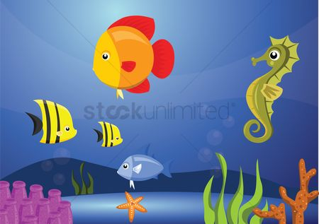 Starfishes : Seahorse and fish