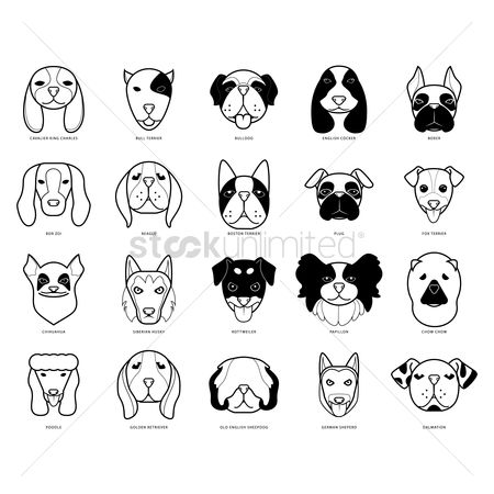 Bull : Set of dogs