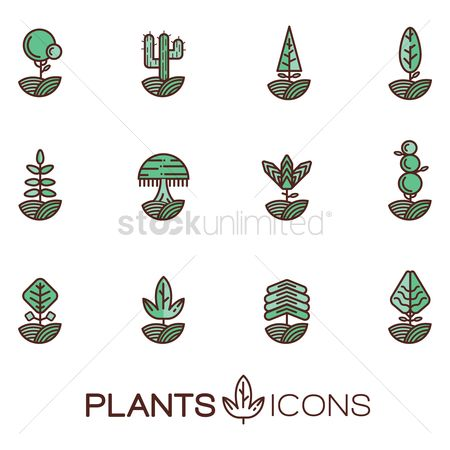 Cactuses : Set of plants icons