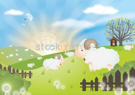 Hills : Sheep in field