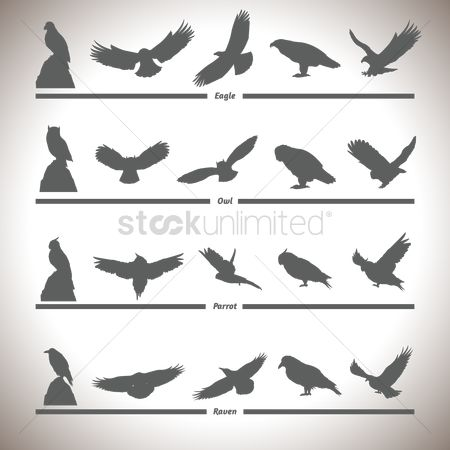 Smart : Silhouette collection of birds