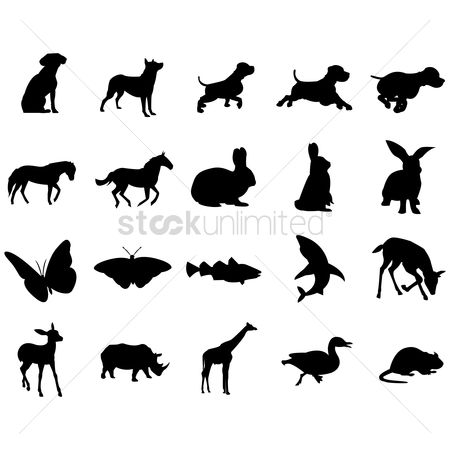 Duck : Silhouette of animals