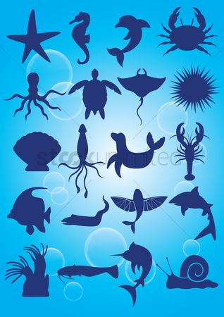 Starfishes : Silhouette of aquatic animals