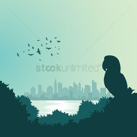Vertebrate : Silhouette of parrot with cityscape