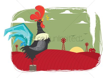 Roosters : Sun rise screaming rooster in field