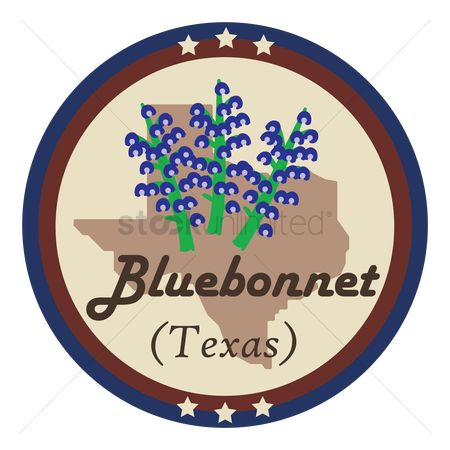 Texas : Texas state with bluebonnet flower