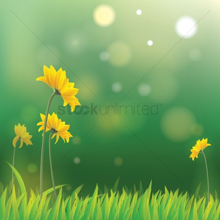 Nature : Yellow daisies with misty background