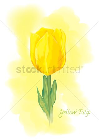 Fragrance : Yellow tulip