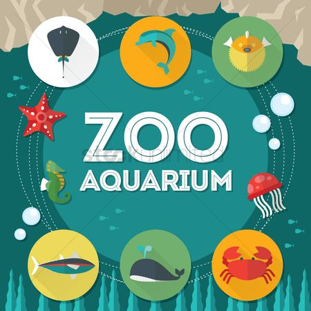 Starfishes : Zoo aquarium