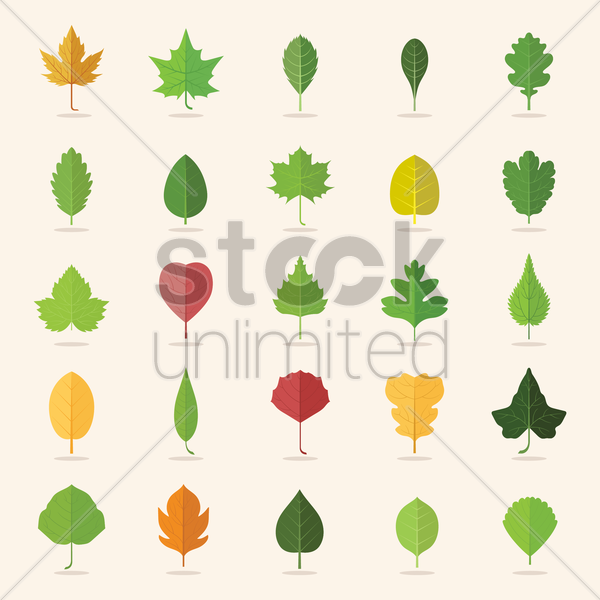 collection of leaf icons vector graphic