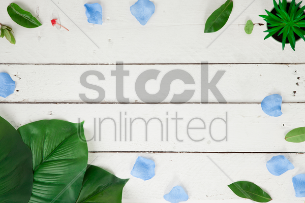 flatlay of white background with plants and leaves stock photo