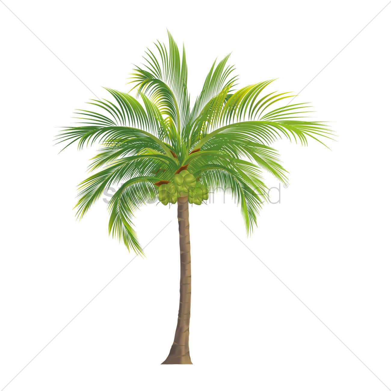 Coconut tree Vector Image - 1935821 | StockUnlimited