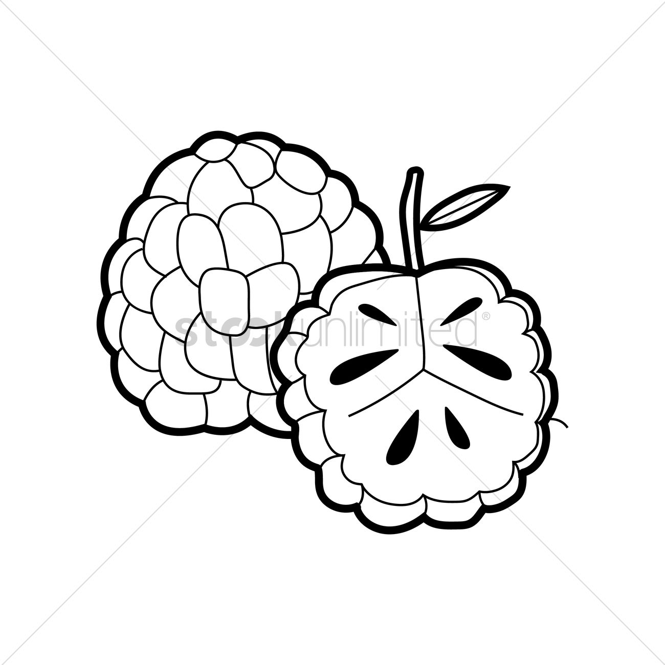 Custard apple Vector Image - 1498849 | StockUnlimited