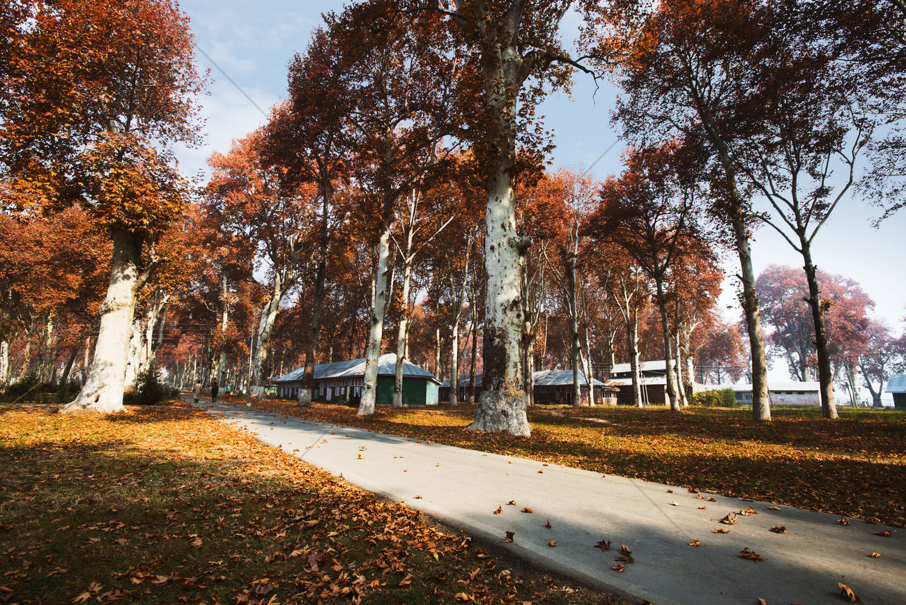 Trees in a garden, naseem bagh, srinagar, jammu and kashmir, india ...