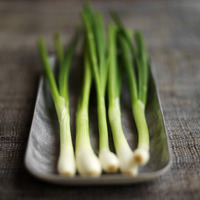 High angle close up of some spring onion