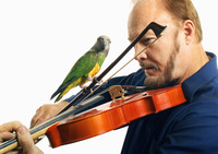 Man playing violin with a bird on it