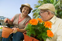 Senior couple gardening