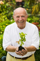 Senior man holding seedling in garden  portrait