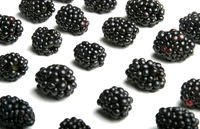 Studio shot of blackberries on white background