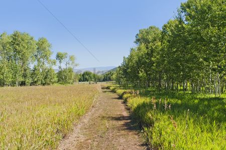 Grass : A tranquil  green country scene with a path leading through the grass field surrounded by trees
