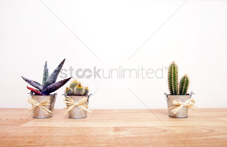 Variety : A variety of cacti in pots