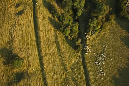 Land : Aerial view of sheep on farming land
