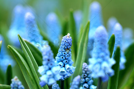 Beautiful : Blue flowers