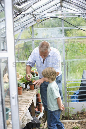 Greenhouse : Boy planting flowers with grandfather in greenhouse