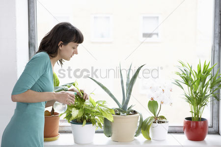 Houseplant : Businesswoman spraying pot plants by window