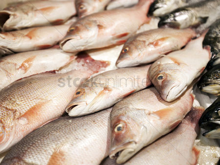 Large group of animals : Close-up of freshly caught fishes in market