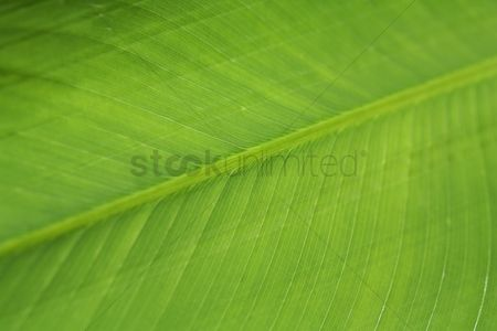 Abstract : Close-up of leaf texture
