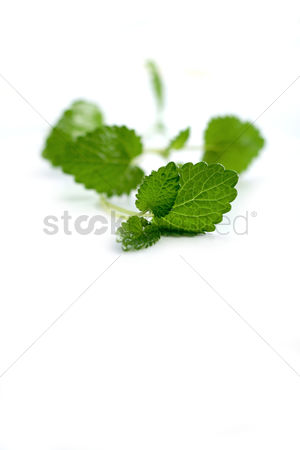 Leaf : Close up of mint on white background