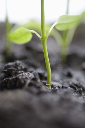 Greenhouse : Close up of seedling