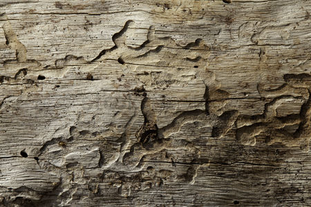 Background : Close-up shot of wood grain pattern