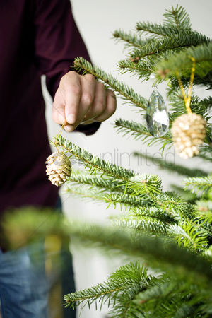 Bliss : Decorating the christmas tree