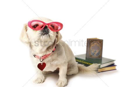 Fashion : Dog with books