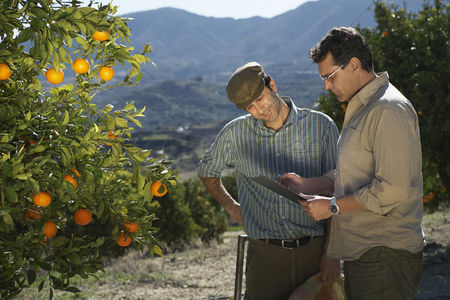Fruit : Farmer and man reading in orchard