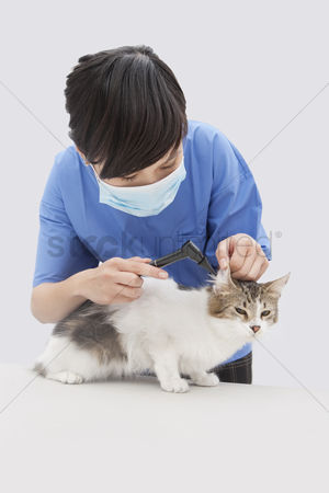 Domesticated animal : Female veterinarian examining cat s ear with an otoscope device against gray background